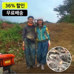 [무료배송]한잎새 지리산 우량 고사리종근 100kg